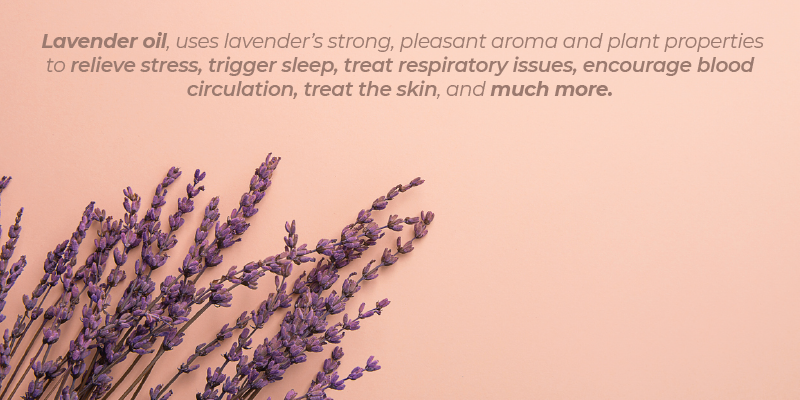 Lavender oil, on the other hand, uses lavender's strong, pleasant aroma and plant properties to relieve stress, trigger sleep, treat respiratory issues, encourage blood circulation, treat the skin, and much more.