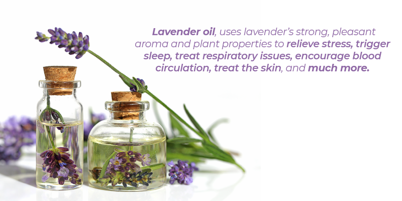 Lavender oil can do wonders for your mind and body, but it can also benefit your skin in a number of ways that you may not have realized