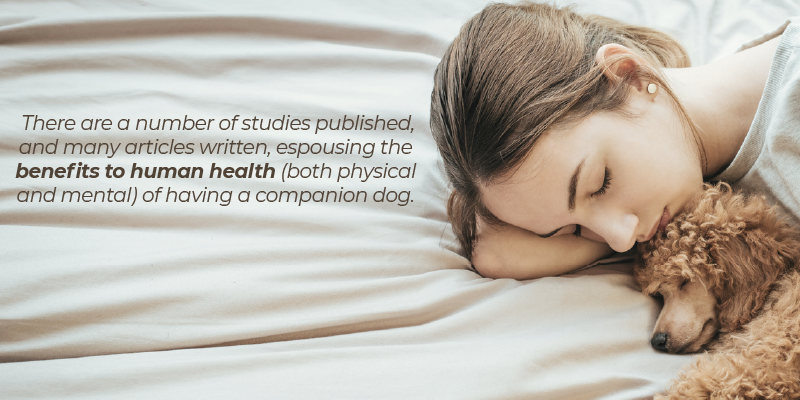 There are a number of studies published, and many articles written, espousing the benefits to human health (both physical and mental) of having a companion dog.