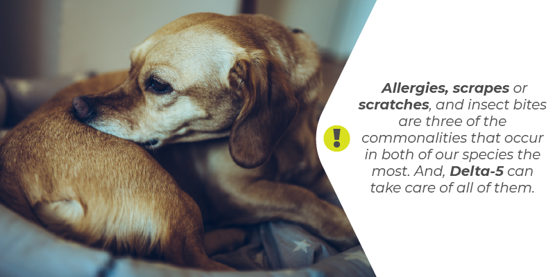 Allergies, scrapes or scratches, and insect bites are three of the commonalities that occur in both of our species the most. And, Delta-5 can take care of all of them.