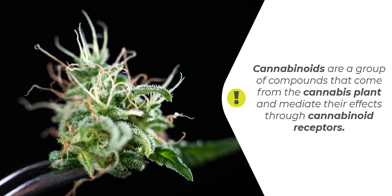 Cannabinoids are a group of compounds that come from the cannabis plant and mediate their effects through cannabinoid receptors.