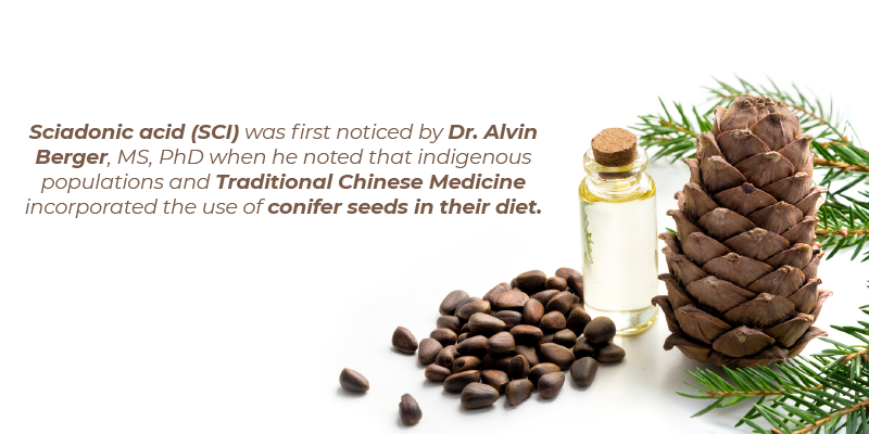 Sciadonic acid (SCI) was first noticed by Dr. Alvin Berger, MS, PhD when he noted that indigenous populations and Traditional Chinese Medicine incorporated the use of conifer seeds in their diet.