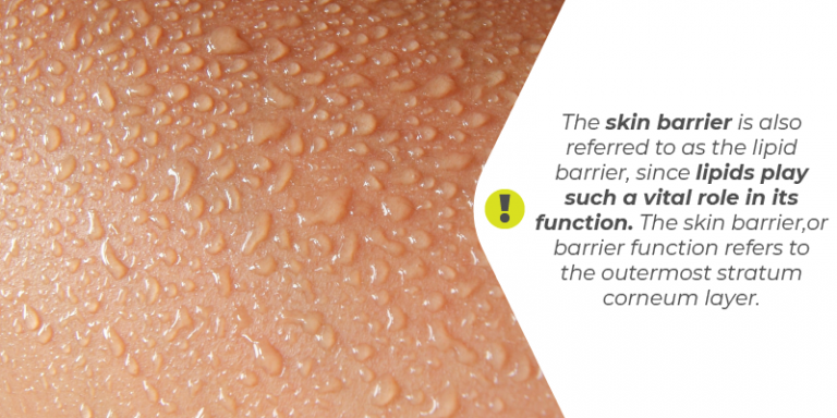 biological barriers of the skin Essays - largest database of quality sample essays and research papers on biological barriers of the skin how the does the skin act as a barrier the skin is cleverly designed to perform in helping the skin acting as a physical, chemical and physical barrier for the body.