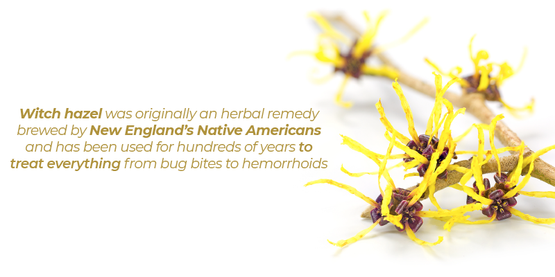 Witch hazel was originally an herbal remedy brewed by New England's Native Americans and has been used for hundreds of years to treat everything from bug bites to hemorrhoids.