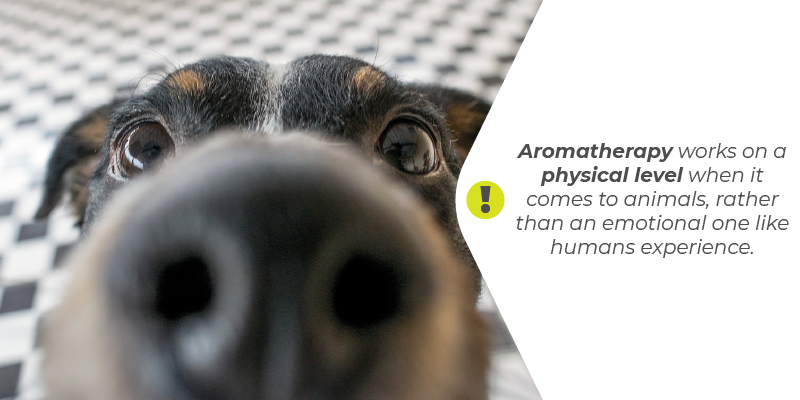 Aromatherapy works on a physical level when it comes to animals, rather than an emotional one like humans experienc