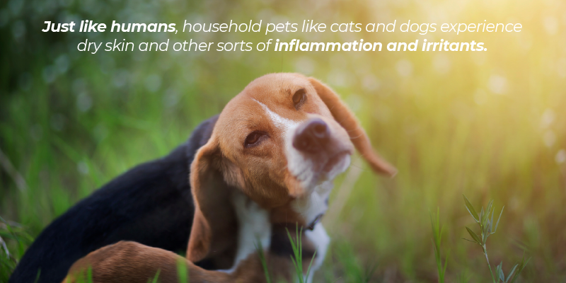 Just like humans, household pets like cats and dogs experience dry skin and other sorts of inflammation and irritants.