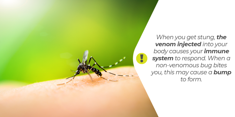 When you get stung, the venom injected into your body causes your immune system to respond. When a non-venomous bug bites you, this may cause a bump to form.