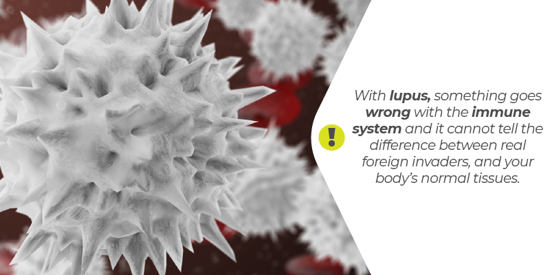 With lupus, something goes wrong with the immune system and it cannot tell the difference between real foreign invaders, and your body's normal tissues.