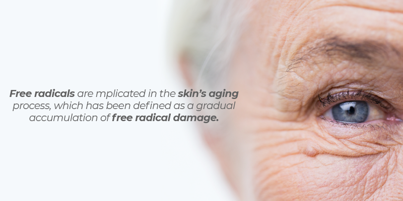 They're implicated in the skin's aging process, which has been defined as a gradual accumulation of free radical damage
