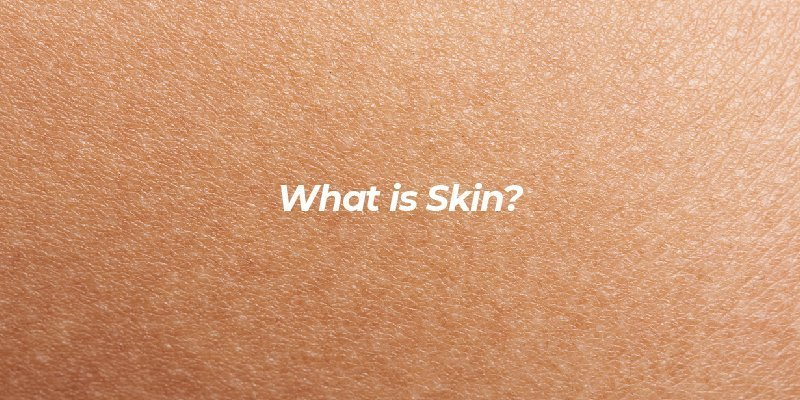 What is skin?