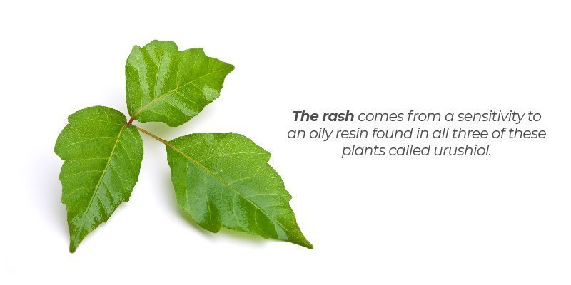 What Causes the Poison Rash